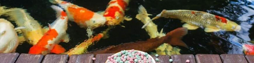Alimento Peixes de Lago