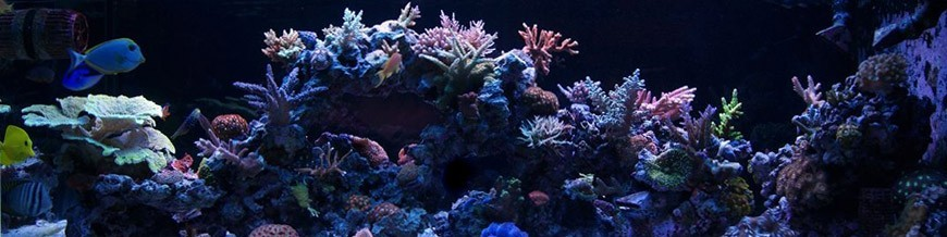 Hardscape - Rocha para Reefs